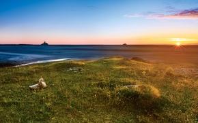 Картинка море, небо, трава, солнце, лучи, рассвет, побережье, горизонт