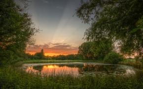 Картинка зелень, лето, природа, пруд, рассвет