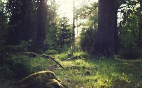 Картинка зелень, лес, лето