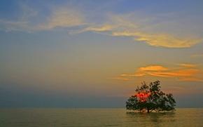Картинка море, небо, облака, закат, дерево