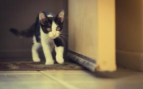 Картинка кошка, глаза, eyes, cat, walking, ходьба