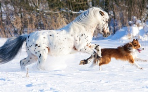 Картинка horse, snow, running, dog, white, cold