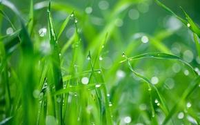 Картинка трава, капли, роса, блики