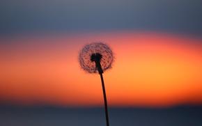 Картинка цветок, облака, одуванчик, зарево
