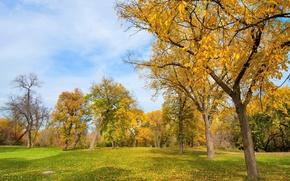 Картинка осень, трава, листья, деревья, парк