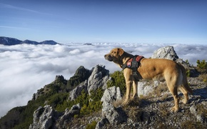 Картинка небо, облака, горы, Собака, шерсть
