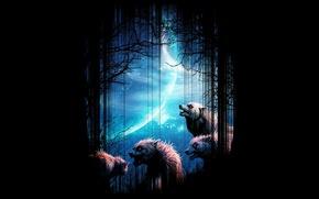 Картинка лес, ночь, фон, луна, волки