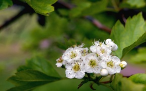 Картинка лето, макро, цветы, природа, зеленый