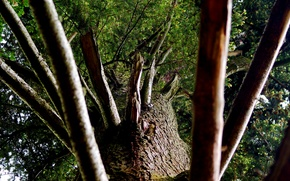 Обои Дерево, кора, ствол, ветви