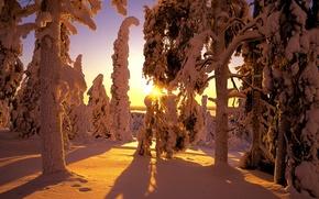 Картинка зима, лес, снег, тени