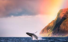 Обои горы, океан, животное, берег, кит