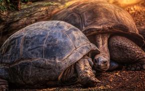 Картинка природа, фон, черепахи