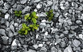 Обои борьба, выживание, листья, камни, растение