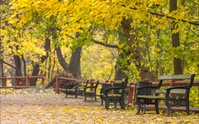Картинка Russia, Moscow, Golden autumn