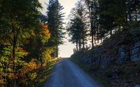 Картинка дорога, осень, лучи, деревья, Nature, road, trees, autumn, fall