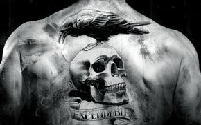 Обои тату, черно-белая, фильм, спина, ворон, череп, The Expendables, неудержимые