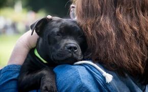 Картинка человек, собака, дружба