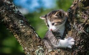 Картинка малыш, котёнок, на дереве