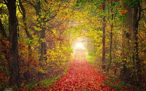Картинка осень, парк, дорожка, листопад
