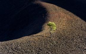 Картинка природа, дерево, земля