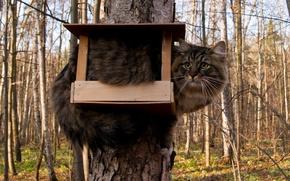 Обои дерево, кормушка, кот