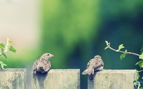 Картинка животные, перья, обои для рабочего стола, два, крылья, фон, листочки, клюв, HD wallpapers, чика и ...