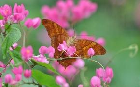Картинка цветок, макро, бабочка, растение, лепестки, насекомое