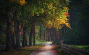 Обои осень, лес, природа, забор, дорожка