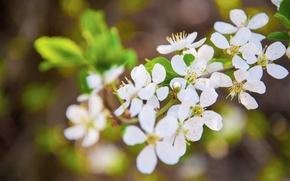 Картинка цветы, ветки, весна, цветение
