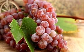 Обои осень, красный, лист, ягоды, виноград, гроздь