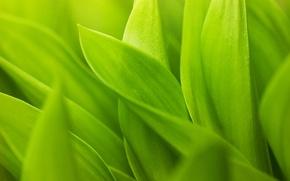 Обои зелёный листья, зелень, стебельки, листки