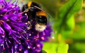 Картинка цветок, макро, нектар, пчела, насекомое