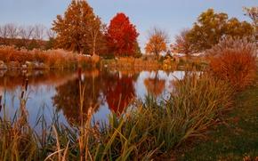 Картинка осень, небо, трава, деревья, озеро, пруд