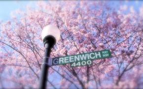 Картинка деревья, цветы, ветки, улица, сакура, указатель, фонарь, greenwich