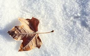 Картинка зима, иней, снег, лист, листок