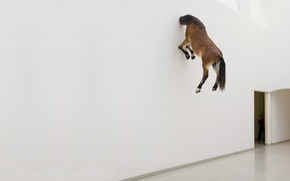 Обои стена, конь, обои