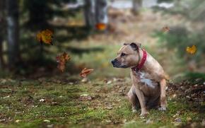 Картинка взгляд, листья, друг, собака