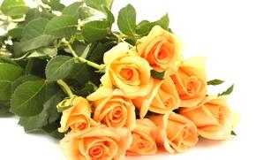 Картинка листья, цветы, розы, букет, лепестки, белый фон, оранжевые