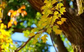 Картинка дерево, макро, ветка, ствол, осень, листья
