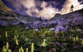 Картинка небо, цветы, горы