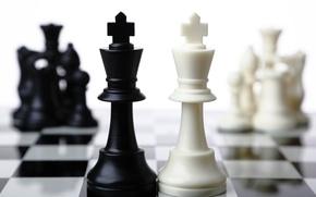 Картинка white, black, chess, king