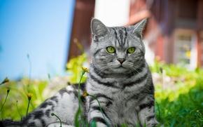Картинка кошка, трава, кот, цветы, лежит