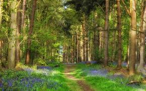 Картинка forest, Green, trees, deer