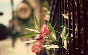 Обои листья, цветы, забор, лепестки
