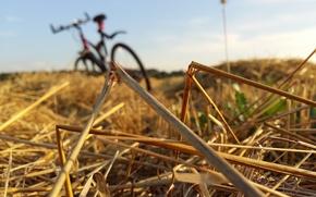 Картинка #grass, #nature, #bike, #sunset