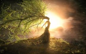 Картинка листья, девушка, закат, дерево, растения, холм, арт, крона, willow, steven donnet