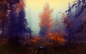 Обои осень, лес, краски