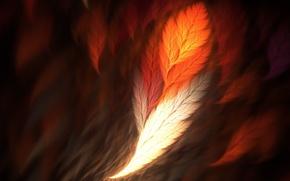Картинка перо, phoenix, рендер