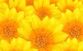 Обои вода, капли, цветы, роса, текстура, лепестки