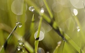 Картинка лето, трава, роса, summer, grass, dew